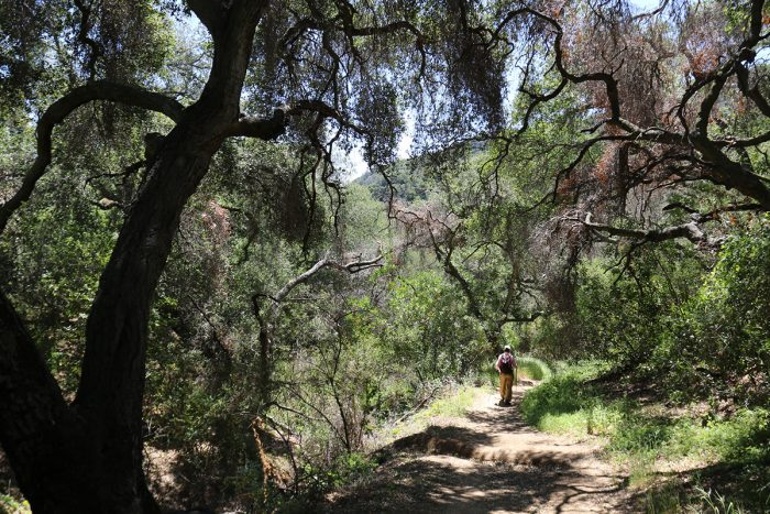 A hiker passes through oak woodland near Topongo Meadow; photos by National Park Service