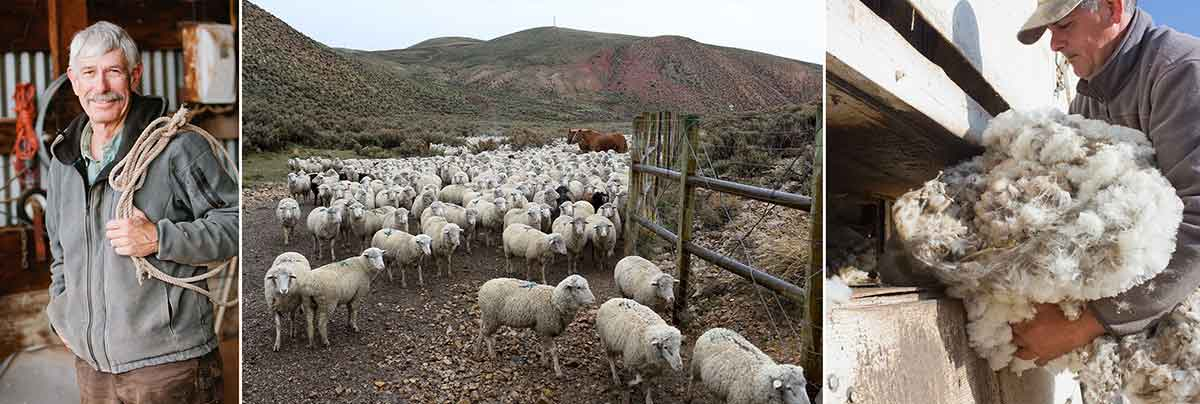 Merino wool sourced from sheep in the Western U.S.