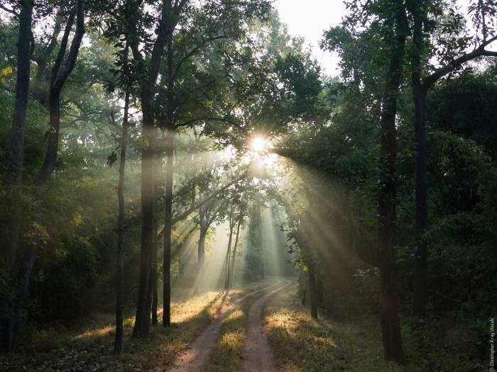 India plants 50 million trees