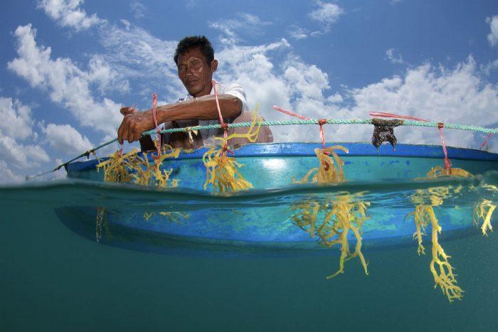 Eric Madeja, Seaweed Farming, 2015 / Bum Bum Island, Semporna, Sabah, Malaysian Borneo