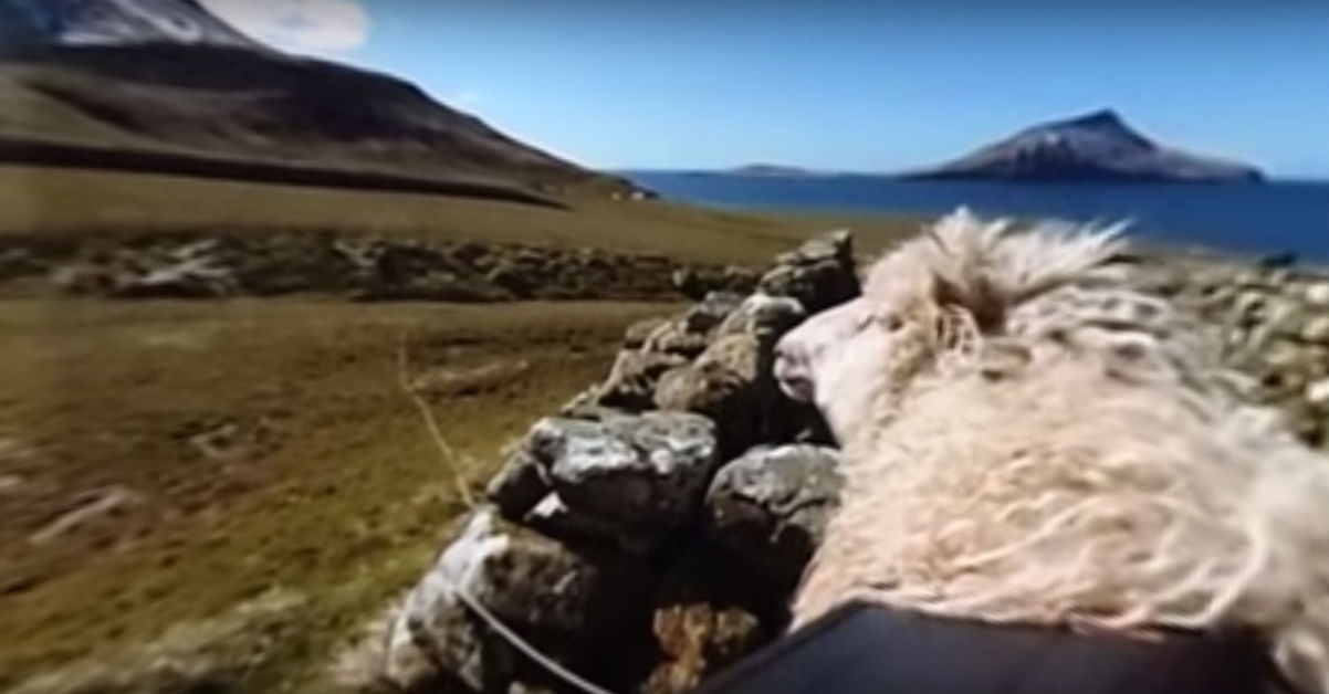 google sheep view 360