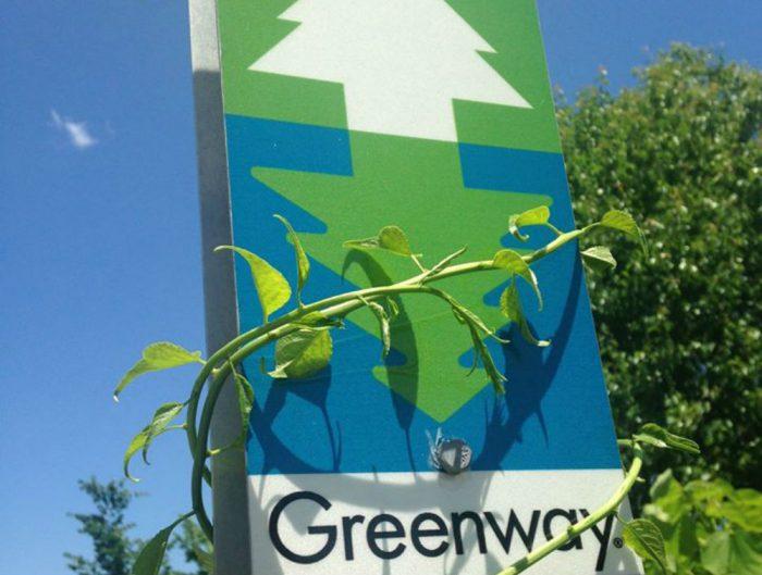 greenway vine