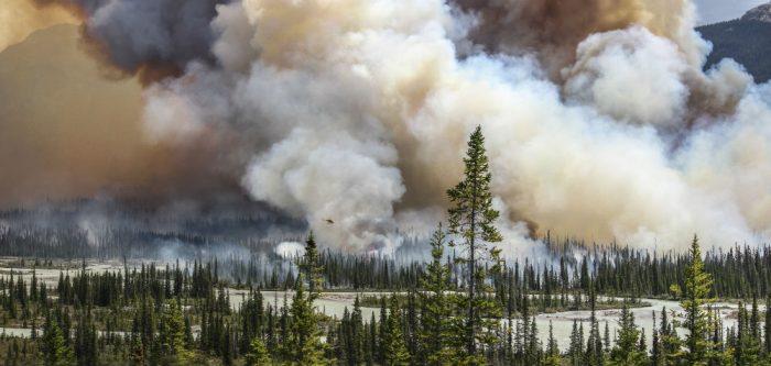 sara lindstrom alberta wildfires