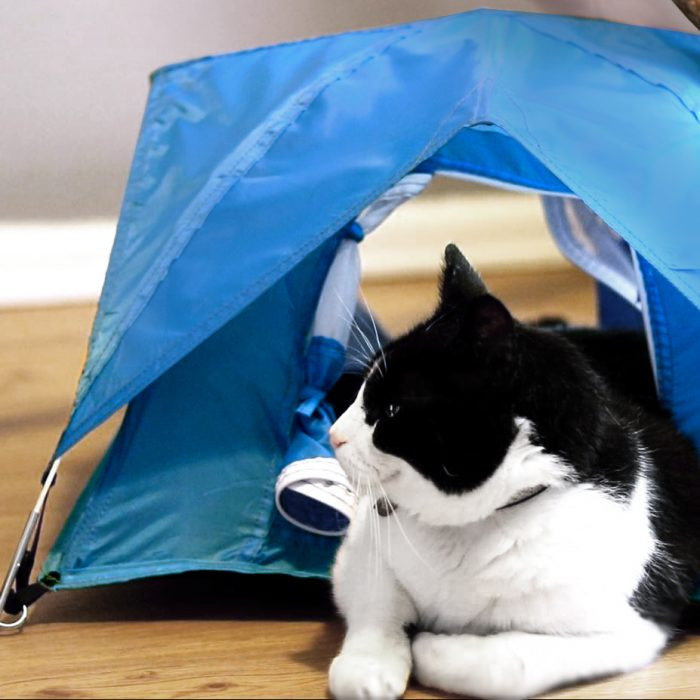 normal cat in tiny tent