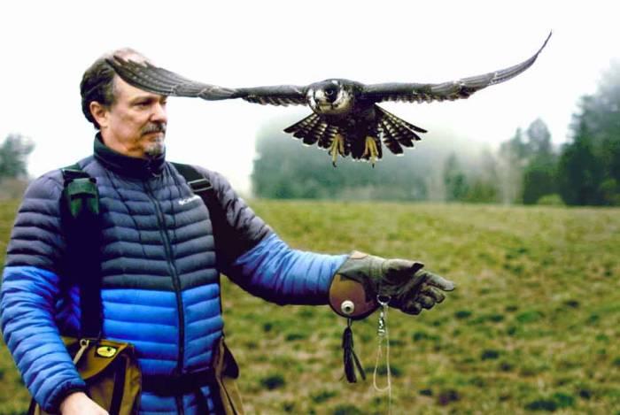 Wayne-Skankey-falconry