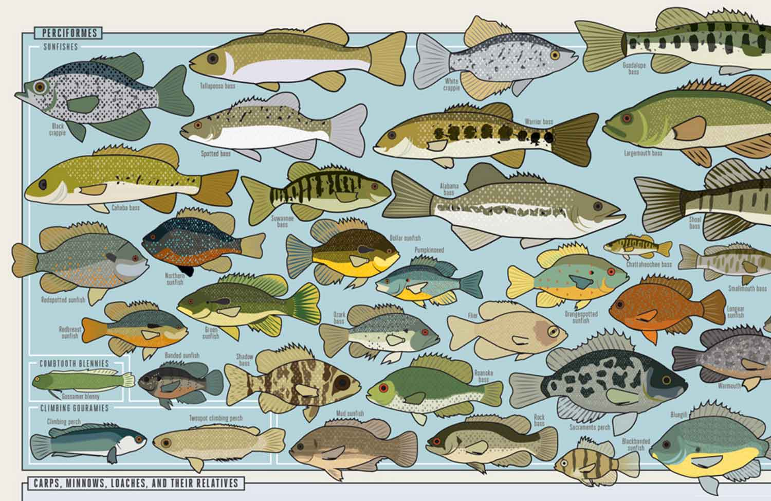 Every Freshwater Fish In America Charted Poster