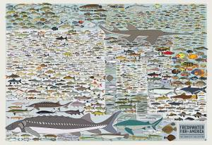 freshwater fish of North America