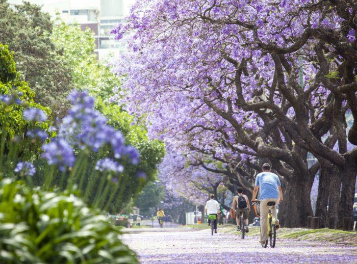 buenos-aires-bike-paths