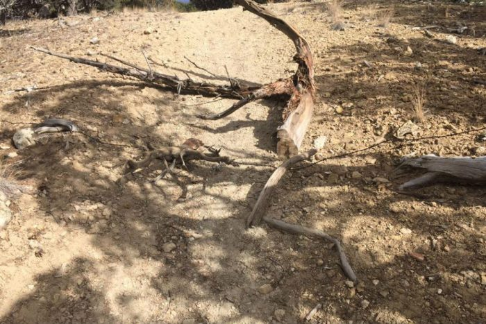 The image of a barbedwire booby trap along the Dirt Surfer Trail in Eagle, Colo. was shared on the Eagle County Cyclists and Friends Facebook page