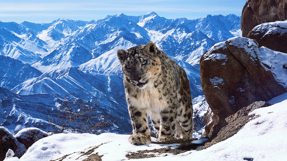Teaser: Planet Earth 2 Could Be The Best Nature Documentary Yet