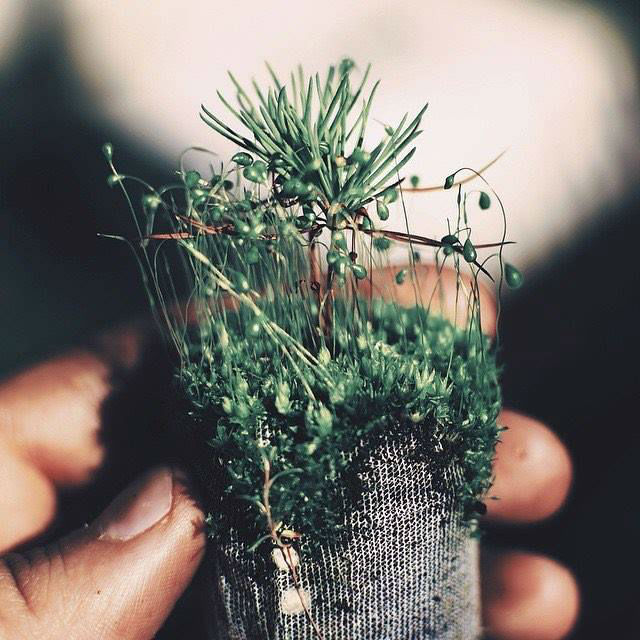 tentree-tree-seedling