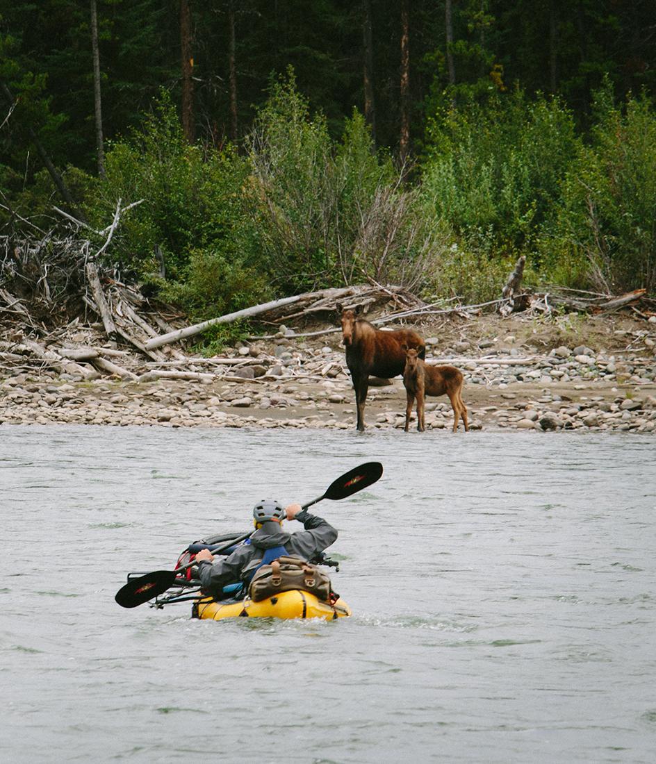 floating past moose Bikerafting Sacred Headwaters