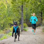 10 rules of running with your dog