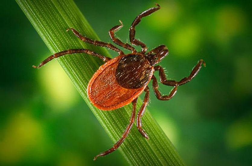 How To Prevent, Spot, And Remove ticks