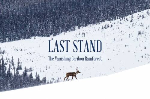 Last Stand trailer caribou