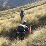 hiking te araroa new zealand