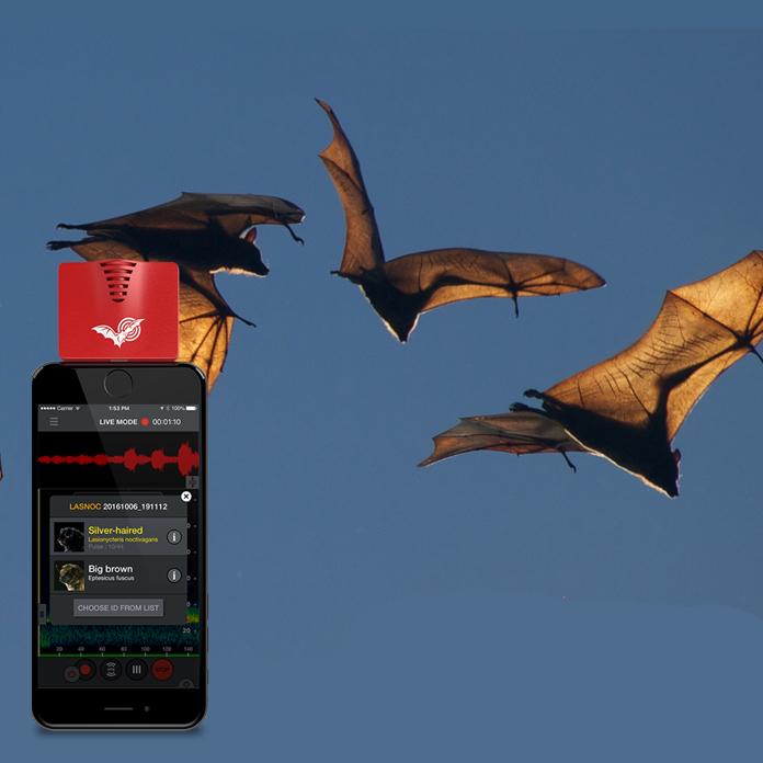echo meter bat identifier