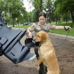 zebra mussels sniffing dogs mn dnr
