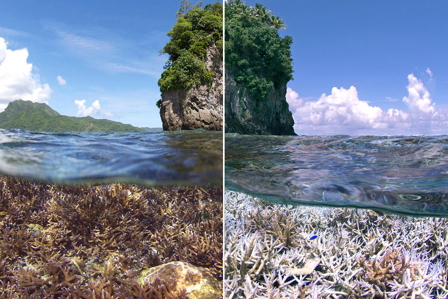 chasing coral bleaching documentary