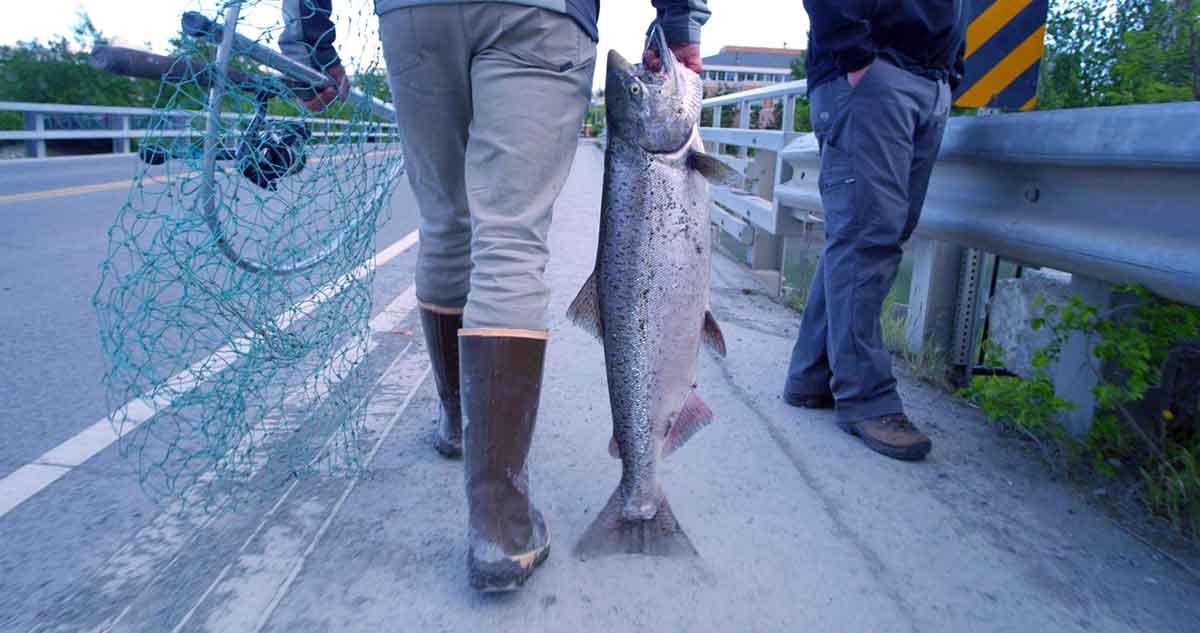 Haul Big Kings: How to Catch Salmon in Alaska's Ship Creek