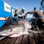 OCEARCH Boat how to catch a great white shark