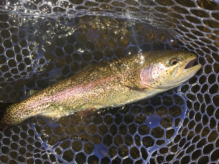 Guide recommended best fly fishing gear