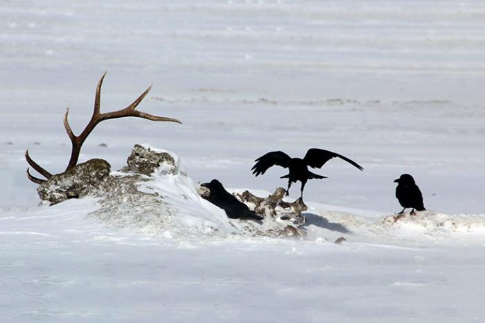dead elk cwd
