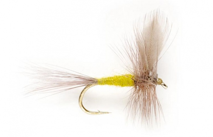 Blue winged olive spring fly fishing