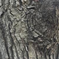 Sht tree