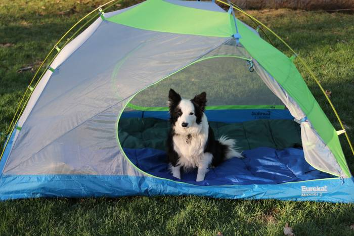 Tips for Camping with Dogs - Eureka Midori Tent