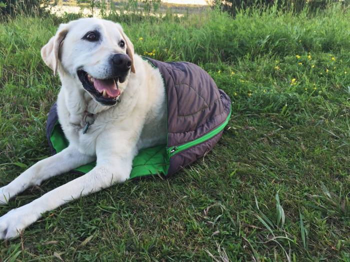 Tips for Camping with a Dog - Choose a Dog Sleeping Bag, like this one from Ruffwear. Pic by Mallory Paige.