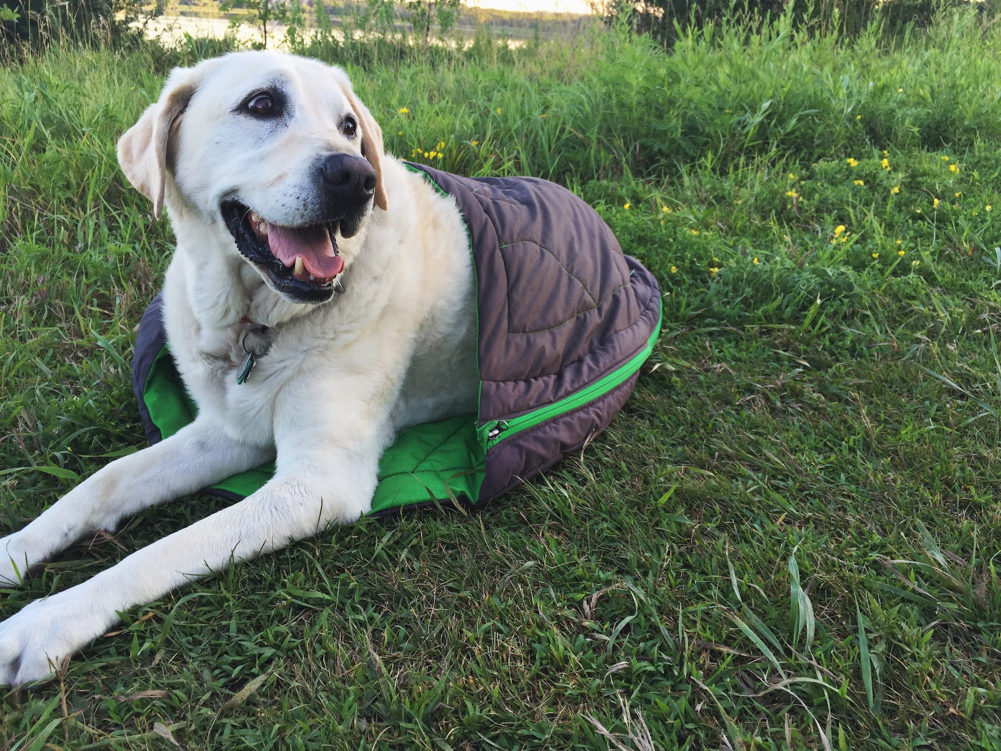 How To: Camping With a Dog | GearJunkie