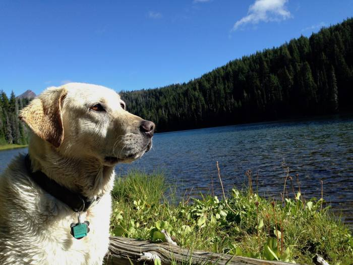 Camping with Dogs - Baylor the Dog and Mallory Paige