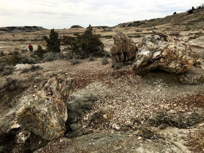 Petrified Forest, Theodore Roosevelt National Park