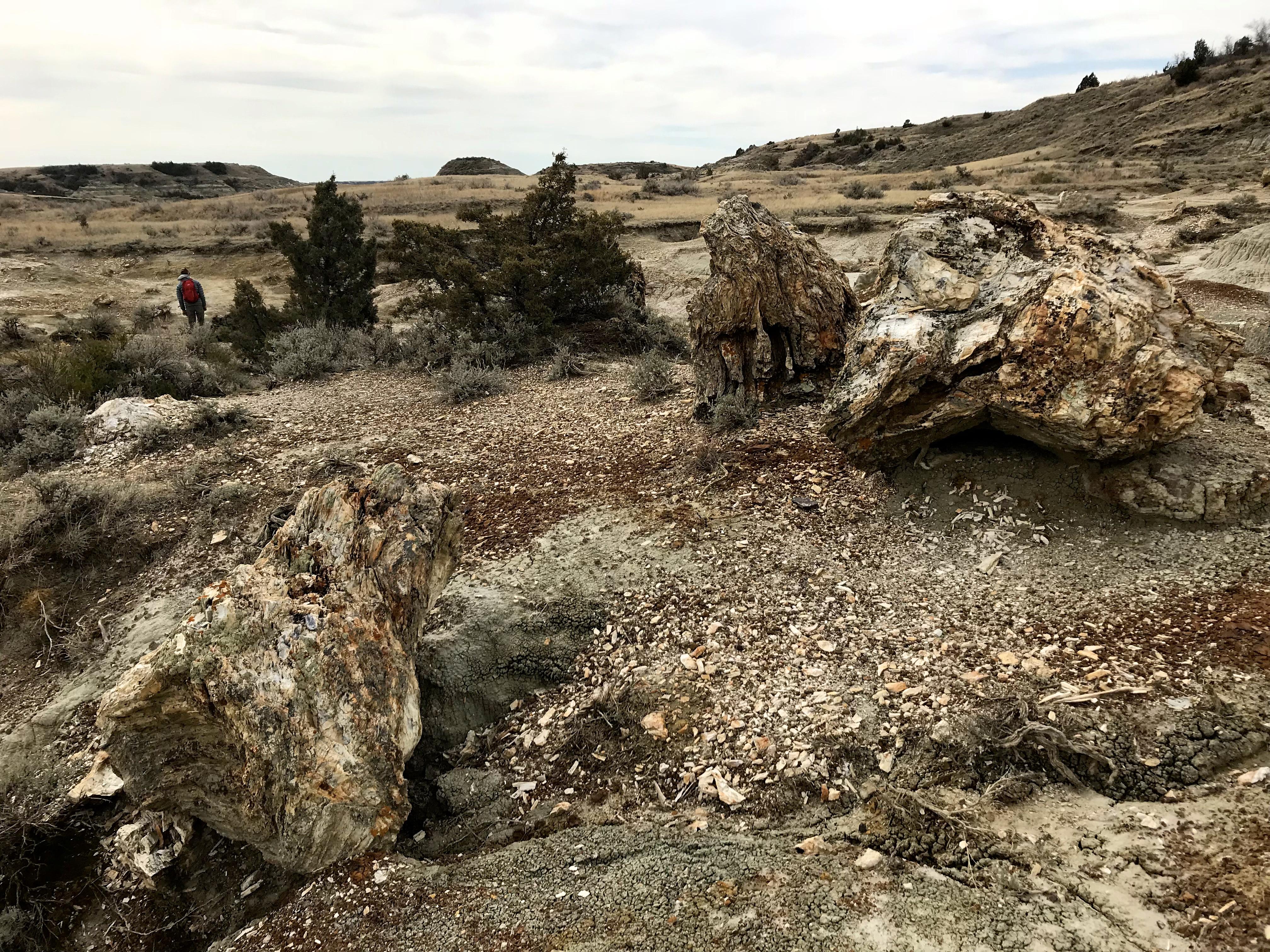 Visit Theodore Roosevelt National Park A Great Plains Gem