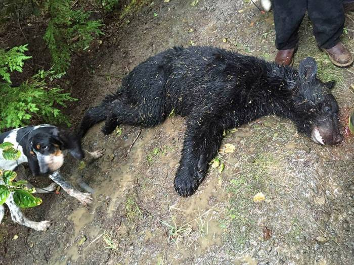 Photo of a dead bear recovered from suspected poacher's cell phone.