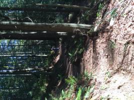 Squak Mt. Issaquah, WA