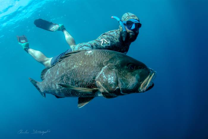 pargo spearfishing