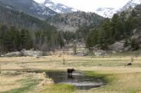 Alces en el Parque Nacional de las Montañas Rocosas