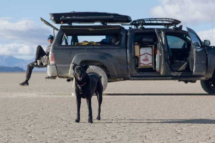 Toyota Tacoma dog mascot