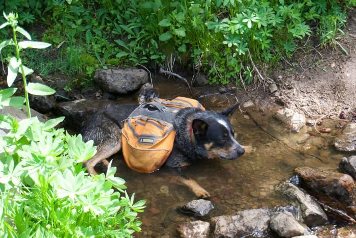 Lola needs a pet fitness tracker