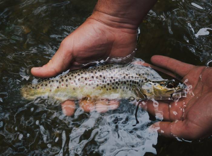 Adventure News of the Week: Lael Wilcox's Latest Feat, Record Lunkers, and More | GearJunkie