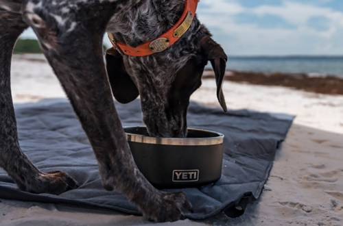YETI Boomer Dog Bowl and Lowlands Camp Blanket