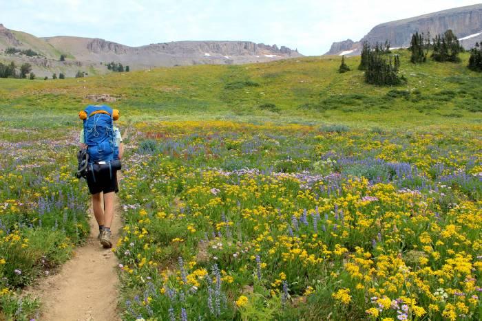 backpacking among wildflowers