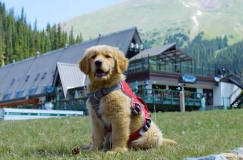 tikka avalanche dog