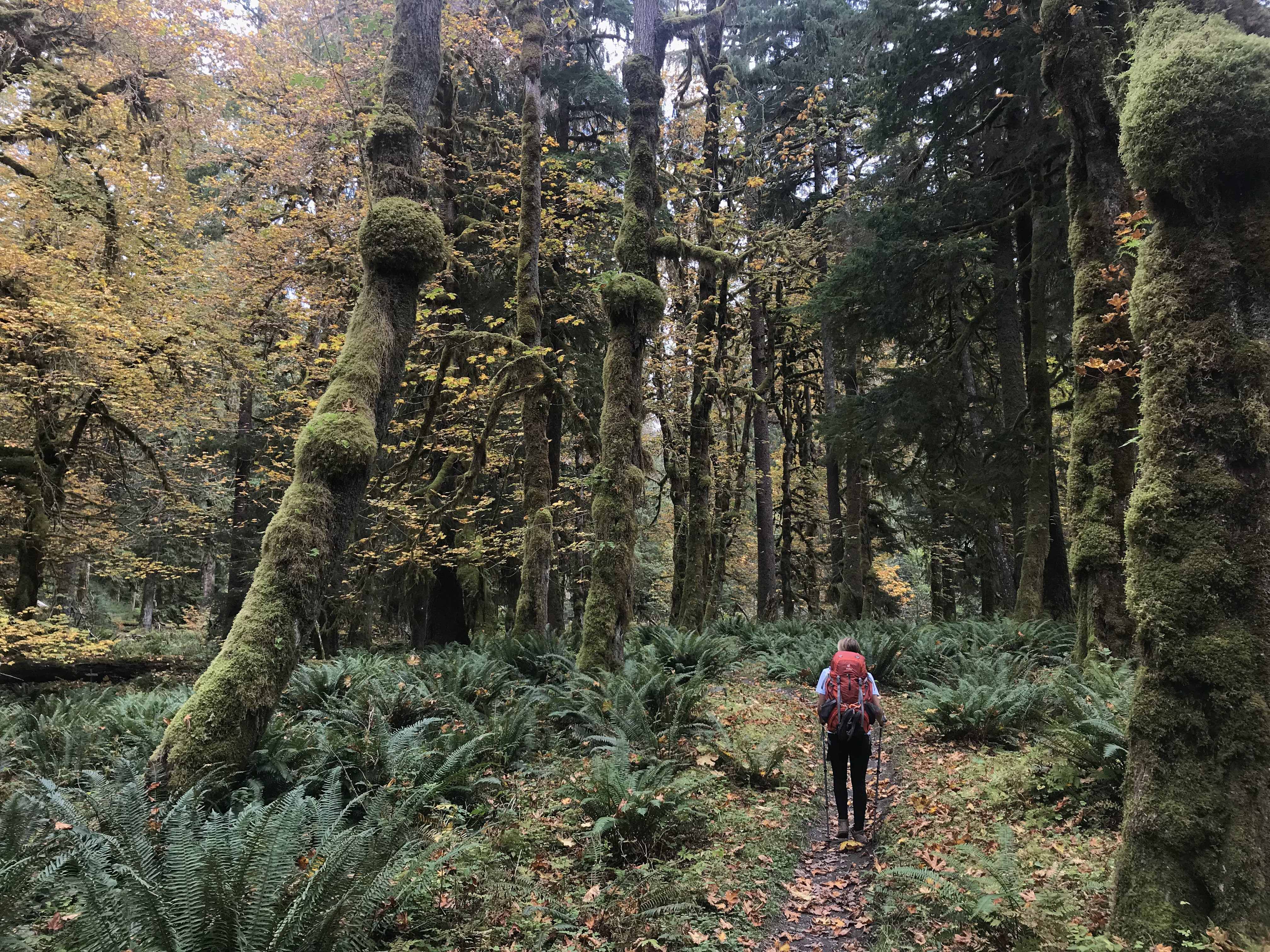 hiking in the Quinault Rain Forest