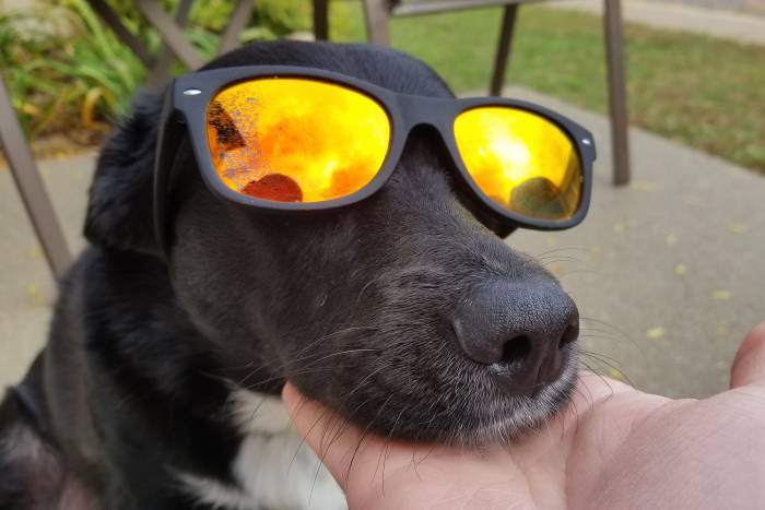 Gamma Ray Polarized Classic Sunglasses