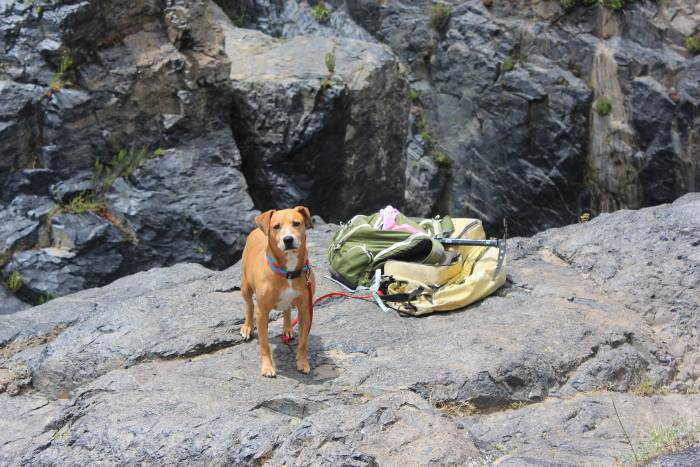 thru-hiking with dog