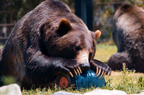 Bear Resistance Certification
