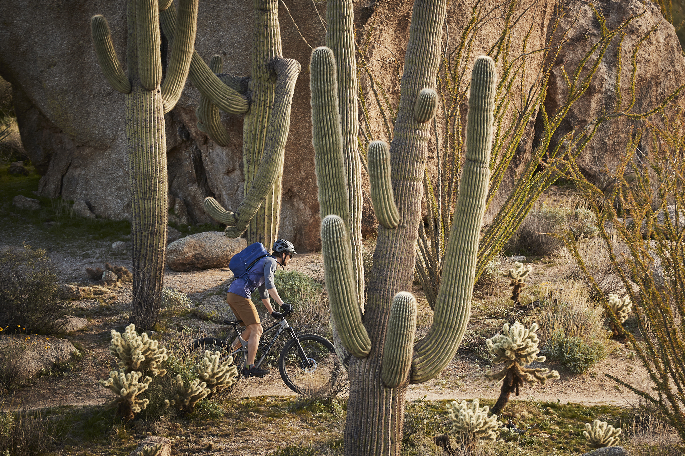 Mountain biker riding on trail through cacti, carrying Hydro Flask Journey pack